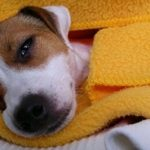 Tamiflu for a puppy with parvovirus
