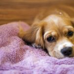 Right ways to get back home your dog cozy and warm.