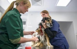 Veterinarian and nurse examining dog