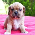 Tips for caring for your new puppy