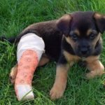 How to care for a dog with a broken leg