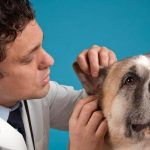 behavior issues in dogs