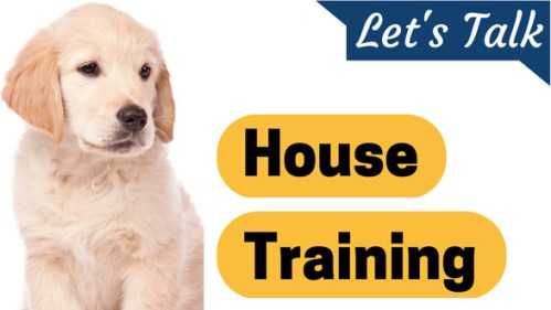 Puppy Training Guidelines