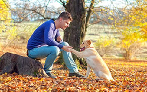dog training guidelines