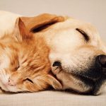 Vet Clinic Visit: Your Cat Will Purr And Your Dog's Tail Will Wag
