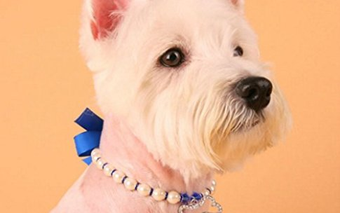 necklace-anti-dog-tugs