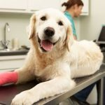 what-to-do-if-dog-%e2%80%8b%e2%80%8bhas-a-wound-in-the-leg