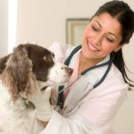 Everything you need to know about the pet insurance
