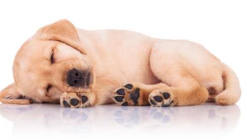Cysts in dogs Symptoms