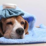 Home Remedies to Lower My Dog's Fever