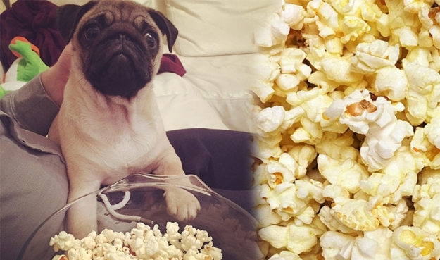 can-dogs-eat-popcorn